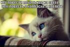 https://lolkot.ru/2010/04/22/povest-o-kolbaske-i-kotlete/