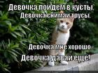 https://lolkot.ru/2013/02/01/poydyom-v-kusty/