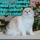 https://lolkot.ru/2016/12/28/pozhelaniya-na-novyy-god/
