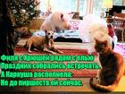 https://lolkot.ru/2018/12/30/prazdnichnyye-ogranicheniya/