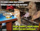 https://lolkot.ru/2016/02/18/prigodnaya-sushka/