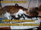 https://lolkot.ru/2014/01/20/prikotleniye/