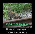https://lolkot.ru/2012/11/28/prisel/