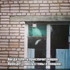 https://lolkot.ru/2019/05/25/prispichennost/