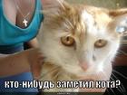 https://lolkot.ru/2010/06/11/prityagivayet-vzglyad/