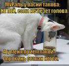 https://lolkot.ru/2014/12/17/priyem/