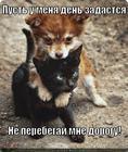 https://lolkot.ru/2014/07/14/problemnyy-perebegayka/