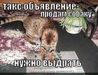 https://lolkot.ru/2010/09/14/prodam-sobaku/