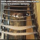 https://lolkot.ru/2017/08/29/prognuvshayasya-vysota/