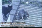 https://lolkot.ru/2011/08/18/programma-maksimum/