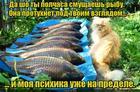 https://lolkot.ru/2016/08/10/protuhayuschaya-vzglyadom/