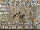 https://lolkot.ru/2015/08/12/ptitsa-osobogo-mneniya/