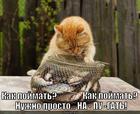 https://lolkot.ru/2013/11/07/pugalo-na-pole-stoyalo/