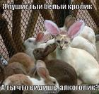 https://lolkot.ru/2011/12/14/pushistyy-belyy-krolik/