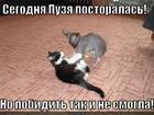 https://lolkot.ru/2012/11/17/puzya/