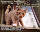 https://lolkot.ru/2014/07/20/rastayal-bez-sleda/