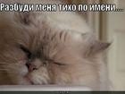 https://lolkot.ru/2011/03/23/razbudi-menya-tiho-po-imeni/
