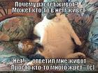 https://lolkot.ru/2014/12/15/razgovor-s-zhivotom/