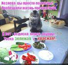 https://lolkot.ru/2014/09/07/raznotsvetnaya-toska/