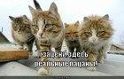 https://lolkot.ru/2012/08/25/realnyye-patsany-2/
