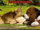 https://lolkot.ru/2016/08/04/reklama-kolbasina/