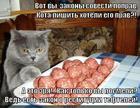 https://lolkot.ru/2014/07/08/restitutsiya-myasnymi-produktami/