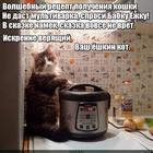 https://lolkot.ru/2017/10/30/retsept-yoshkinogo-kota/