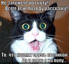 https://lolkot.ru/2013/03/24/rezhet-pravdu-matku/