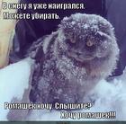 https://lolkot.ru/2014/02/15/romashkovyy-hotun/