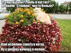 https://lolkot.ru/2018/05/18/royalnyy-kot/