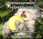 https://lolkot.ru/2013/08/03/rumyanyye/