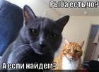 https://lolkot.ru/2011/11/04/ryba-yest/