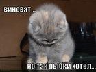 https://lolkot.ru/2011/12/13/rybki-hotel/
