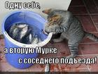 https://lolkot.ru/2012/11/27/rybku-lyubimoy/