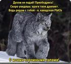 https://lolkot.ru/2020/01/25/rysya-duhopodemnaya/