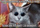 https://lolkot.ru/2012/11/24/ryumka-myasa/