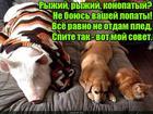 https://lolkot.ru/2016/11/11/ryzhe-konopataya-ugroza/