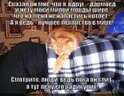 https://lolkot.ru/2014/08/25/ryzheye-lekarstvo/