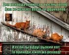 https://lolkot.ru/2014/09/10/ryzhiy-rekord/