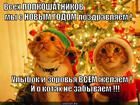 https://lolkot.ru/2012/12/28/s-novym-godom-pozdravlyayem/