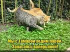 https://lolkot.ru/2017/08/16/s-tamarkoy-za-valeryankoy/