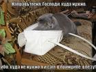 https://lolkot.ru/2013/01/28/sam-vlezu/