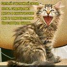 https://lolkot.ru/2012/06/05/samyy-strashnyy-zver/