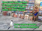 https://lolkot.ru/2016/03/27/sedobnyye-assotsiatsii/