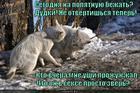 https://lolkot.ru/2014/02/05/seks-mashina/