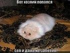 https://lolkot.ru/2010/07/12/sel-i-ne-zametil/