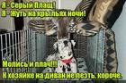 https://lolkot.ru/2018/06/19/seraya-zhut/