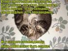 https://lolkot.ru/2015/07/17/serdechnaya-aksioma/
