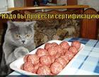 https://lolkot.ru/2014/09/13/sertifikatsiya/