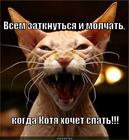 https://lolkot.ru/2014/02/01/sha-muhi/